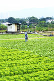 Cultivated land and farmer spraying Stock Photography