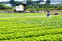 Cultivated land and farmer spraying Royalty Free Stock Image