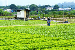Cultivated land and farmer spraying Stock Image