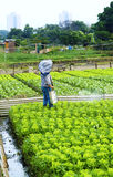 Cultivated land and farmer spraying Stock Images