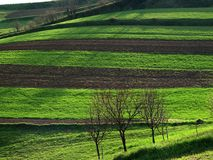 Cultivated Land with Fruit Trees Royalty Free Stock Image