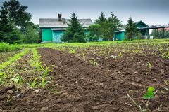 Cultivated land with green sprouts in rural. Small rural houses near evergreen trees at backdrop stock photos