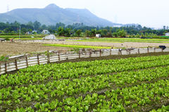 Cultivated land. In hong kong stock photo