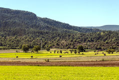 Cultivated land with mountains Royalty Free Stock Images