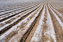 Cultivated land and ridges sets. Arable land sorted out rows of neat ridge Royalty Free Stock Images