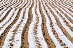 Cultivated land and ridges sets. Arable land sorted out rows of neat ridge Stock Photography