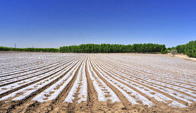 Cultivated land and ridges sets. Arable land sorted out rows of neat ridge Royalty Free Stock Photos