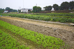 Cultivated land in a rural Stock Photography