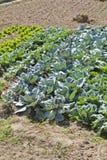 Cultivated land in a rural landscape. Brihuega, Spain Stock Image