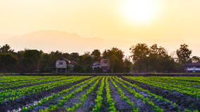 Cultivated land in a rural landscape. At sunset Royalty Free Stock Image