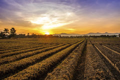 Cultivated land in a rural landscape at sunset.  Stock Photos