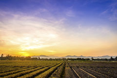 Cultivated land in a rural landscape at sunset.  Royalty Free Stock Images