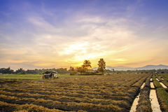 Cultivated land in a rural landscape at sunset.  Royalty Free Stock Photo