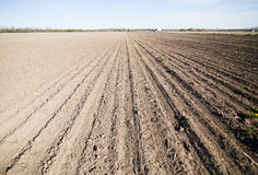Cultivated land in the Spring Royalty Free Stock Photography