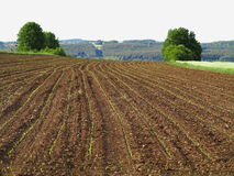 Cultivated land at spring. Huge field with furrows and its planted crops already starting to sprout. Farmland in Germany Stock Photography