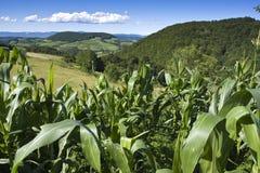 Cultivated land on top of Manjaca mountain. Beautiful nature and cultivated land on top of Manjaca mountain, near Banja Luka, Republika Srpska, Bosnia Royalty Free Stock Images