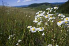 Cultivated land on top of Manjaca mountain. Beautiful nature and cultivated land on top of Manjaca mountain, near Banja Luka, Republika Srpska, Bosnia Stock Photography