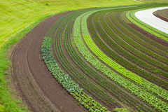 Cultivated land with vegetable patches Royalty Free Stock Images