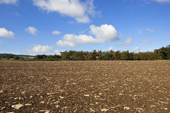 Cultivated landscape Stock Photos