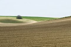 Cultivated landscape with bush Stock Photos