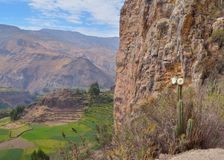 Cultivated landscape, Colca canyon Stock Photos