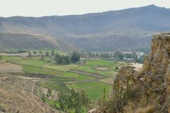 Cultivated landscape, Colca canyon Royalty Free Stock Photos