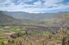 Cultivated landscape, Colca canyon Royalty Free Stock Image