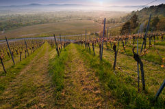 Cultivated landscape vineyard. Vineyards in the southern of Germany royalty free stock photo