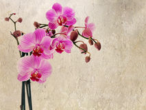 Cultivated orchid closeup on rustic background stock images