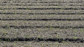 Cultivated Plots Royalty Free Stock Photos
