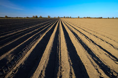 Cultivated potato field in spring time Stock Images