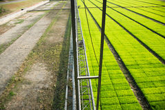 A cultivated rice field machine. Stock Image