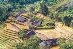 Cultivated Rice fields on terraced mountain farm landscapes. Stock Images