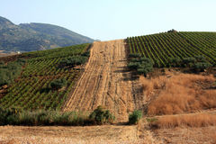 Cultivated Sicilian countryside Royalty Free Stock Photos