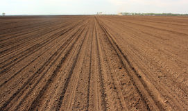 Cultivated soil. On sunny day waiting rain to start its job stock photo