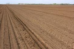 Cultivated soil Stock Photography