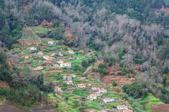 Cultivated terraced fields on the cliff top on the island of Madeira, Stock Photo