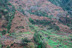 Cultivated terraced fields on the cliff top on the island of Madeira, Royalty Free Stock Images