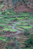 Cultivated terraced fields on the cliff top on the island of Madeira, Stock Photography