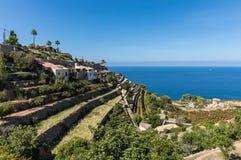 Cultivated terraces in Banyalbufar. Majorca Balearic Islands, Spain stock images