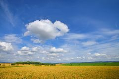 Cultivated wheat field under blue sky with clouds. In Germany royalty free stock photos