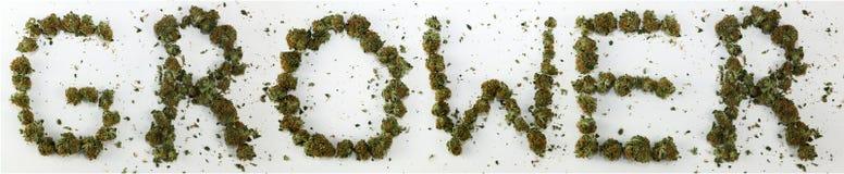 Cultivateur écrit avec la marijuana Photo stock