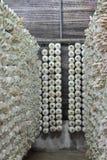 Cultivateur cylindrique de champignon de couche Images libres de droits