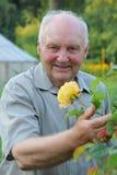 Cultivateur des roses images libres de droits