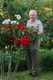 Cultivateur des roses photos stock