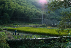 Cultivating in Chinese Mountain Village Stock Photos