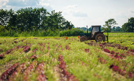 Cultivating Farmland Royalty Free Stock Photography