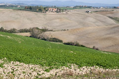 Cultivating fields Crete Senesi Stock Photography