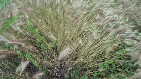 Cultivating of grass hay stock video