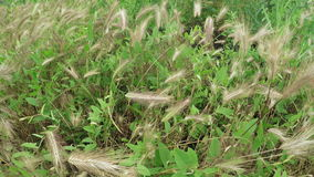 Cultivating of grass hay stock video footage